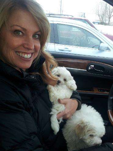 White Havanese with new owner